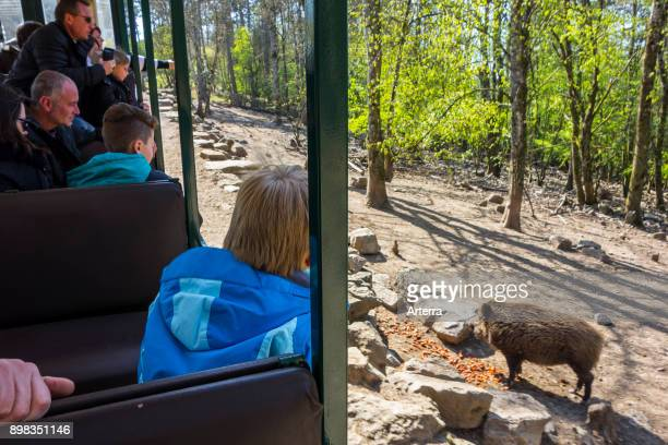 Safari train with visitors watching animals in wildlife park at the Domain of the Caves of Han HansurLesse Belgian Ardennes Belgium