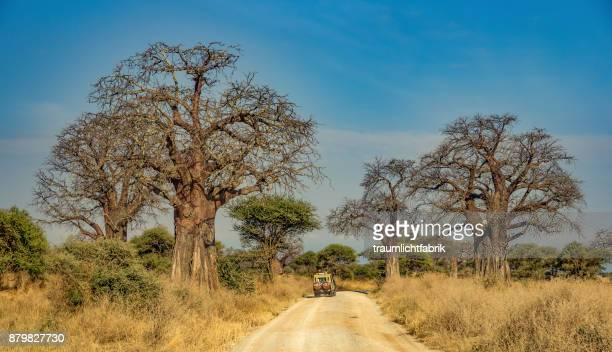 safari under baobab trees - tarangire national park stock pictures, royalty-free photos & images