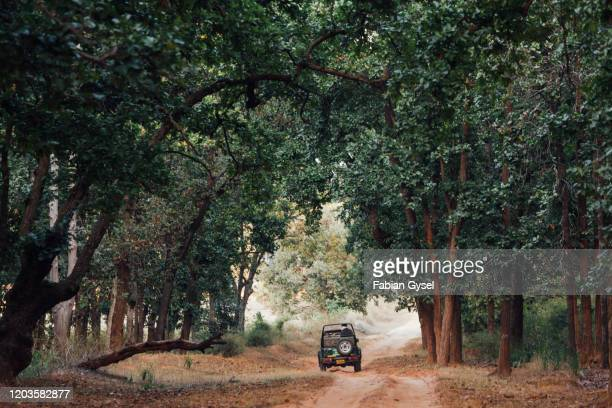 safari vehicle in the forest in india - madhya pradesh stock pictures, royalty-free photos & images