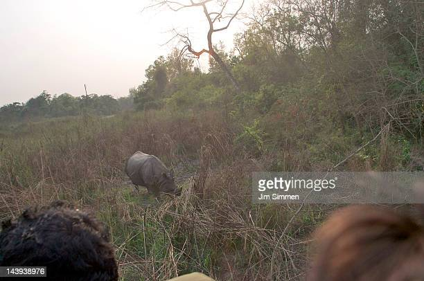 safe view of a rhino - terai stock pictures, royalty-free photos & images