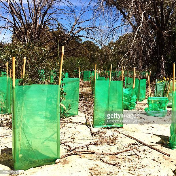 Safety Nets By Plants At Beach Against Trees