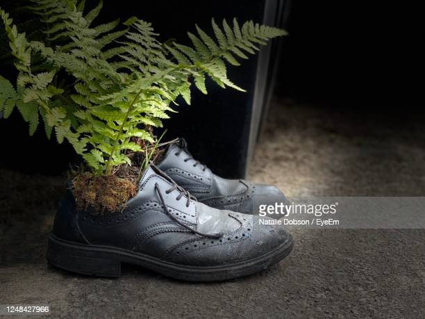 safety shoes with plants inside - snow boot stock pictures, royalty-free photos & images