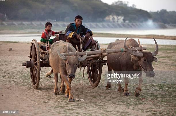 sagaing, myanmar - ox cart fotografías e imágenes de stock