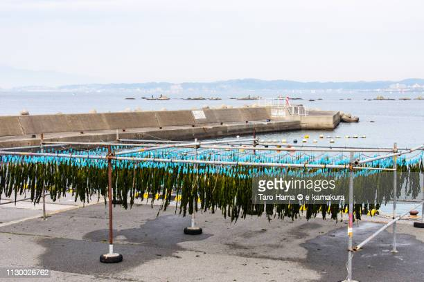 Sagami Bay, Pacific Ocean and seaweed drying on the harbor in Isshiki District of Hayama town in Kanagawa prefecture in Japan