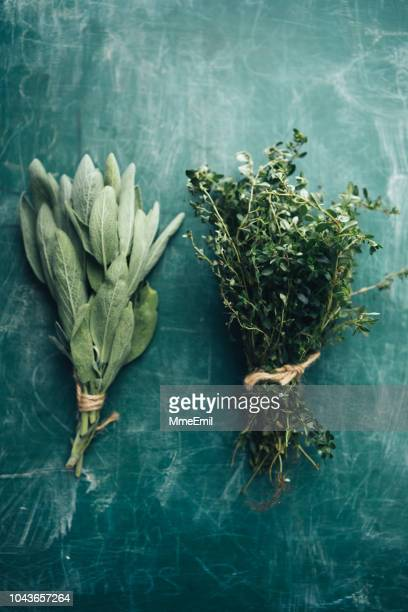 sage and oregano - botany stock pictures, royalty-free photos & images