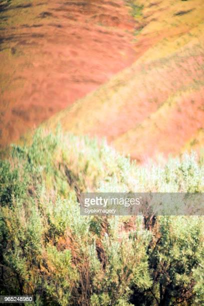 Sage brush and hillside, focus on foreground