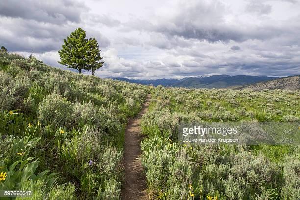 sage brush, yellowstone national park, wyoming, usa - sagebrush stock pictures, royalty-free photos & images