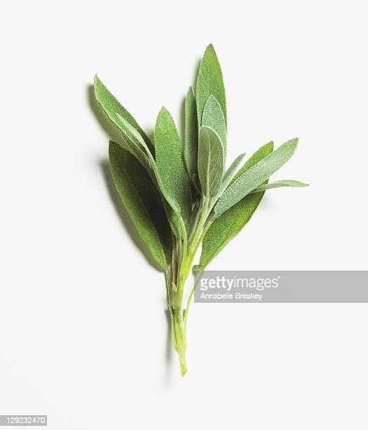 Sage Leaves, Herbs