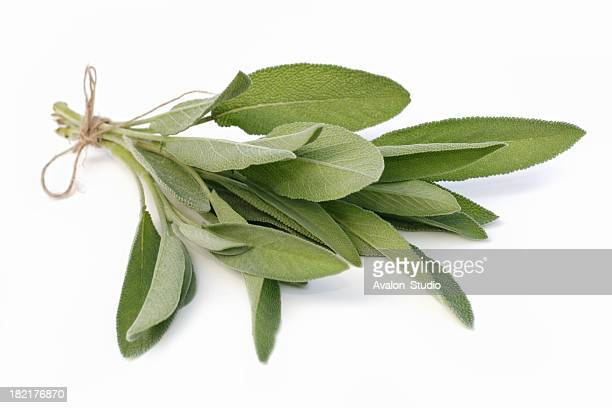 sage - herb stock pictures, royalty-free photos & images