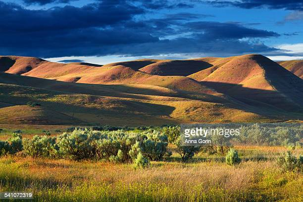 sagebrush field and rolling hills, storm clouds - sagebrush stock pictures, royalty-free photos & images