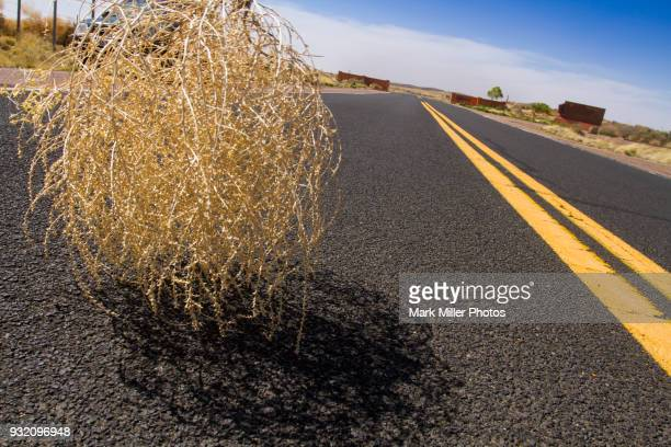sagebrush tumbleweed rolling across highway in western usa - tumbleweed stock photos and pictures