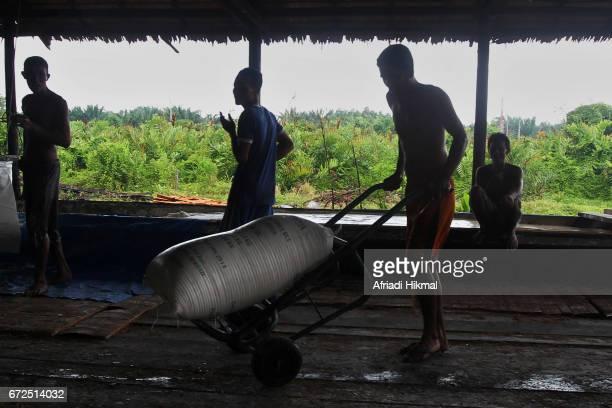 sago log in island of riau - riau images stockfoto's en -beelden