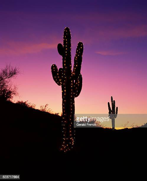 Cactus Christmas Lights Stock Photos And Pictures