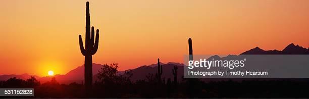 saguaro cacti in kofa wildlife refuge - timothy hearsum stock pictures, royalty-free photos & images