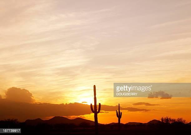 Saguaro Cactus at sunset