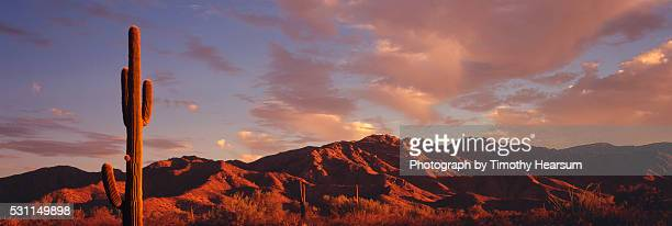 saguaro cactus at sunset with mountains and sky beyond - timothy hearsum stock pictures, royalty-free photos & images