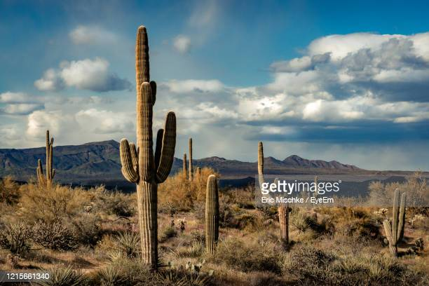 saguaro cactus growing on field against sky - semi arid stock pictures, royalty-free photos & images