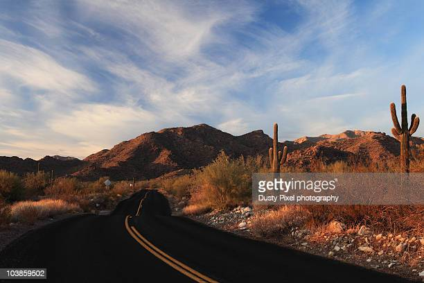 saguaro curve - sonoran desert stock pictures, royalty-free photos & images