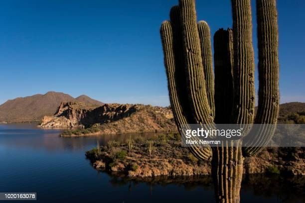 saguaro lake - mark's stock pictures, royalty-free photos & images