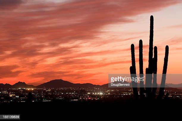 Saguaro Silhouette On Desert City Sunset