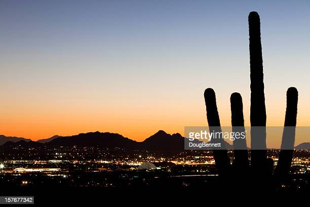Saguaro Silhouette Over Desert City Lights