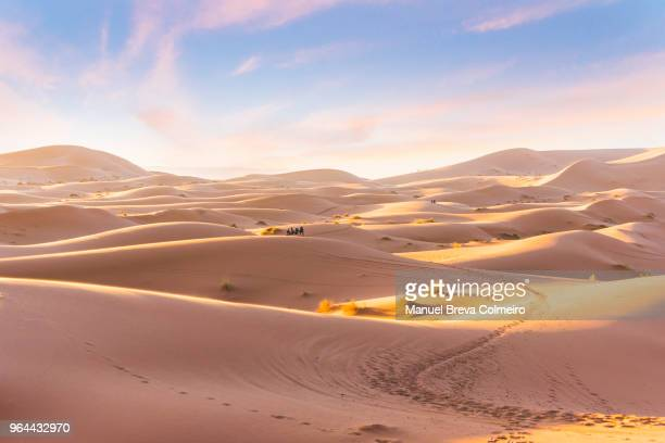 sahara desert - merzouga stock pictures, royalty-free photos & images
