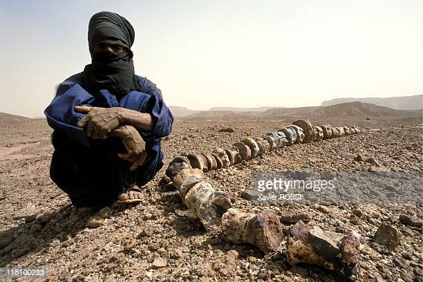Sahara The valley of dinosaurs in Niamey Niger in December 2000 A Tuareg guard with a vertebra probably from a Jobaria