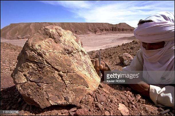 Sahara The valley of dinosaurs in Niamey Niger in December 2000 A Tuareg frees the head of a femur most likely to have belonged to a Jobaria