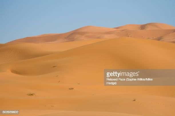 Saharan Sand Dunes