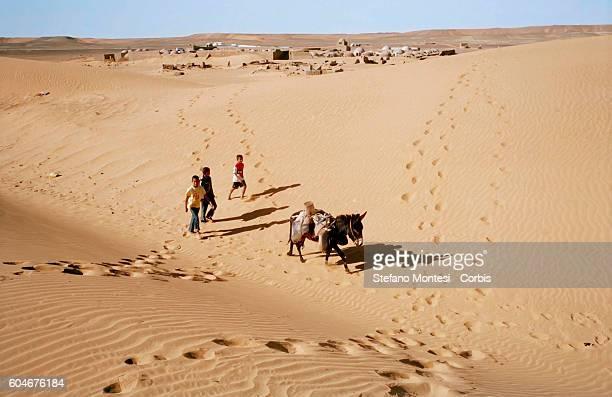 Sahrawi children carry water with a donkey through the Sahara Desert near the Sahrawi refugee camp in Dakhla on February 2 2012 in Tindouf Algeria