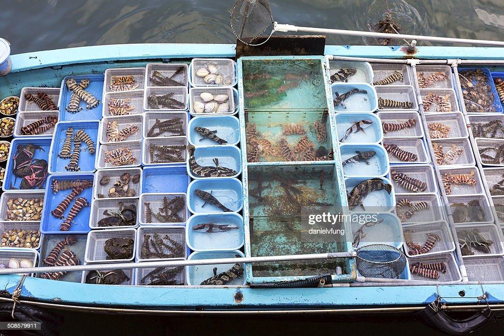 Sai Kung floating fish market : Stock Photo