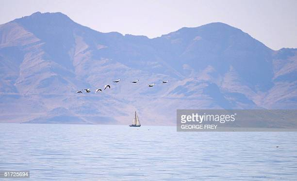 A sail boat and some birds enjoy an afternoon on the Great Salt Lakein Utah 24 July 2001 The Great Salt Lake is five to eight times saltier than the...