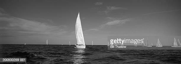 sailboat regatta (b&w) - voilier noir et blanc photos et images de collection