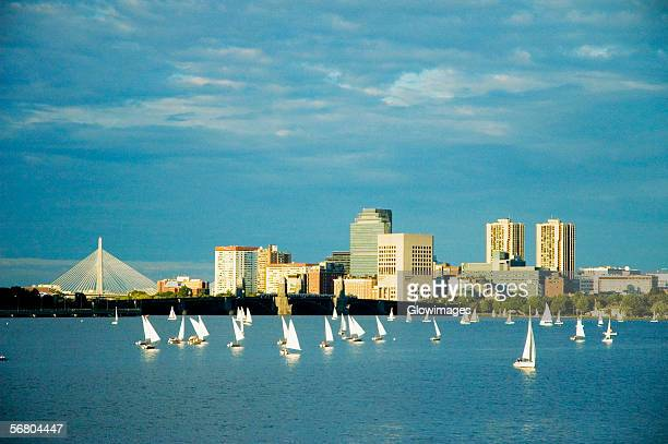 Sailboats in a river, Charles River, Boston, Massachusetts, USA