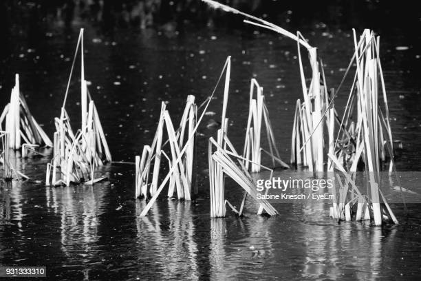 Sailboats In Water