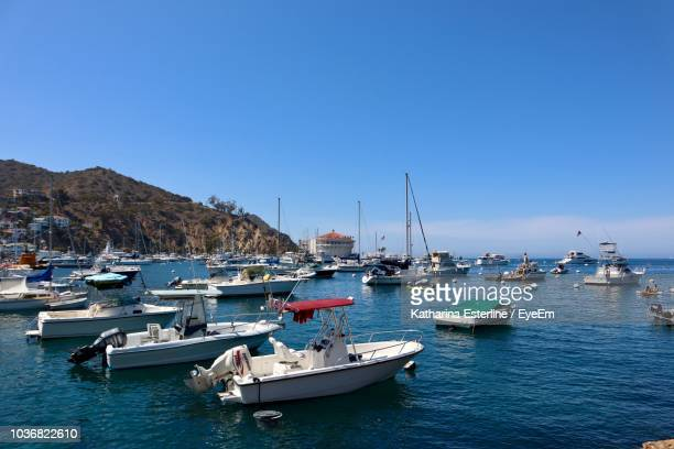 sailboats moored at harbor against clear blue sky - catalina island stock photos and pictures