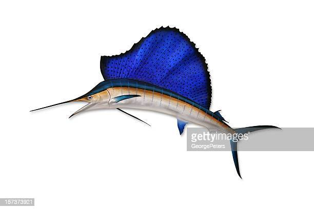 sailfish with clipping path - swordfish stock pictures, royalty-free photos & images