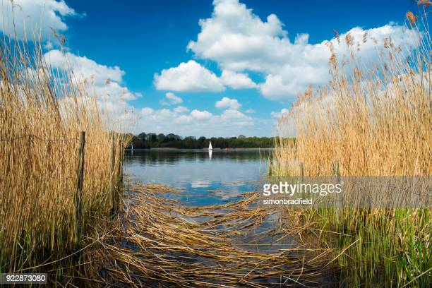 sailing on frensham great pond in the surrey hills - surrey england stock photos and pictures