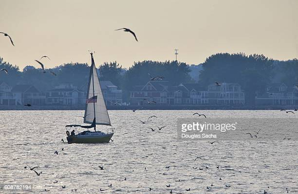 sailing vessel on lake erie with middle bass island in the background - middle bass club stock photos and pictures