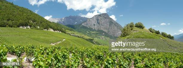saillon vineyards rhone valley - rhone stock pictures, royalty-free photos & images