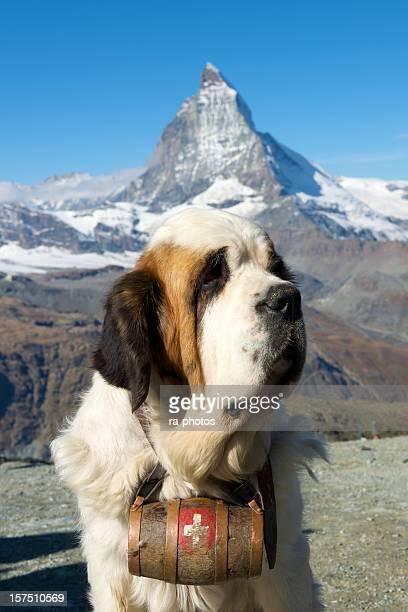 Bernhardiner Hund mit Matterhorn