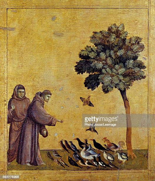 Saint Francis of Assisi preaching to the birds Detail of the predella of St Francis of Assisi receiving the Stigmata Painting by Giotto Di Bondone...