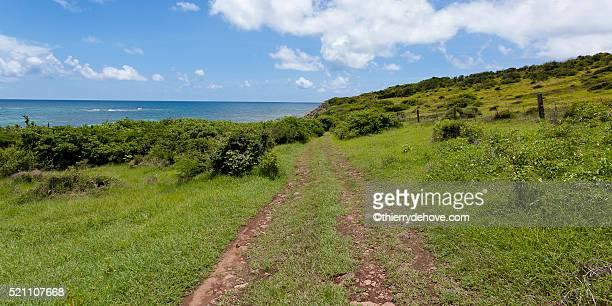 saint martin beach - guadeloupe photos et images de collection