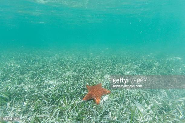 Saint Martin Beaches Underwater