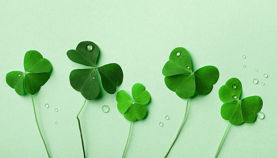 Saint Patricks Day background with green shamrock top view. 1194621742