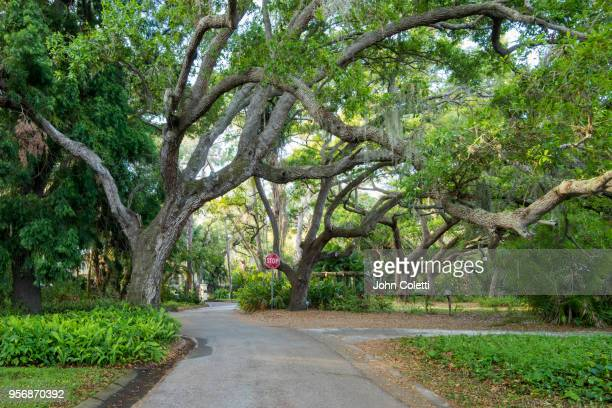 saint petersburg, florida, driftwood neighborhood - st. petersburg florida stock pictures, royalty-free photos & images