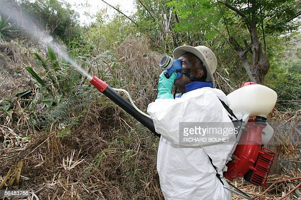 A man sprays insecticide against the Aedes Albopictus mosquito which transmits the Chikungunya virus in SaintPaul west of the Reunion island 23...