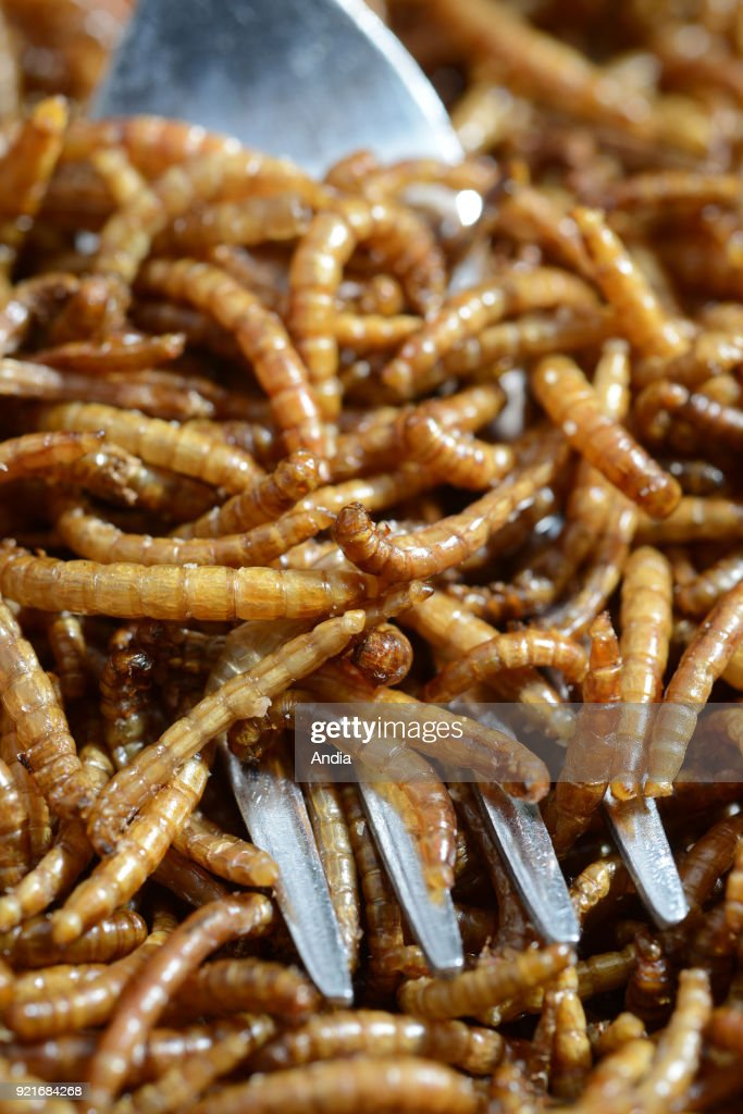 Saint-Martin-le-Chatel (central-eastern France). . Edible mealworms (tenebrio molitor). Cooked mealworms in a plate.