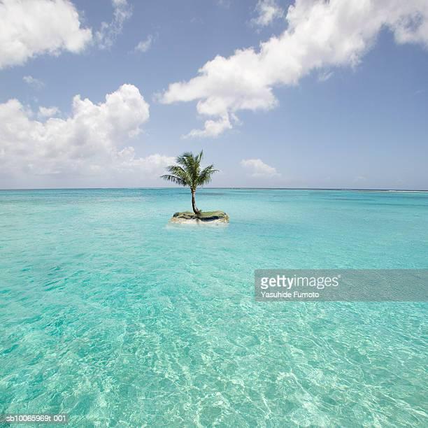 Saipan, Small island with palm tree in sea
