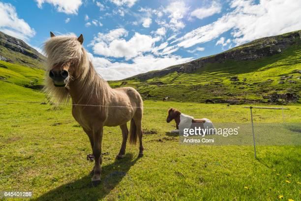 Saksun, Faroe islands, Denmark, Europe